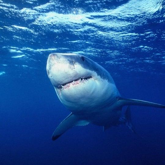 бассейн с акулами сонник