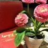 Foto Lind's Cafe, Semarang