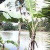 Foto Kali Bogowonto, Bagelen