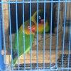 Foto Pasar Burung Tunggorono, Jombang