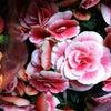 Фото Радуга Цветов