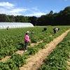 Charlton Fruit Farm