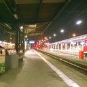 trueffelhamster-1156356