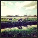 reintje-van-der-molen-48045563