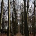 dennis-hoogenboom-5037225