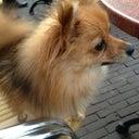 linda-westdijk-52233790