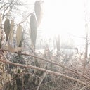 sebastian-frost-72171861
