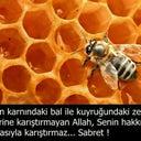 hasan-caypinar-90787552