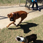 Photo taken at Echo Mountain Dog Park by Mariana T. on 3/24/2013