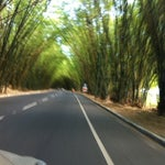 O arco formado por bambus na estrada do aeroporto de Salvador nos faz sentir acolhidos nesta linda cidade.