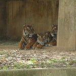 Photo taken at Great Cats at The National Zoo by Dave on 11/8/2012