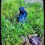 Photo taken at East Texas Arboretum and Botanical by Jeremy M. on 9/16/2011