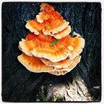 Photo taken at Highbridge Park by Susan D. on 8/9/2012