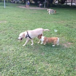 Photo taken at Dog Run @ Bishan Park by Edvarcl H. on 8/24/2013