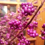 Photo taken at Sunny's Florist by East Grace L. on 11/8/2013