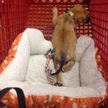 Photo taken at Pet Supermarket by Vicky A. on 2/16/2014