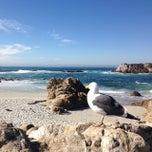 Photo taken at Bird Rock by Felipe K. on 1/20/2014