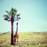 Photo taken at The Living Desert Zoo & Botanical Gardens by Lindsey G. on 5/27/2013