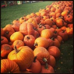 Photo taken at Selmi's Greenhouse and Farm Market by Amy S. on 10/6/2013