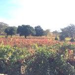 Photo taken at Little Vineyards & Winery by Lauren W. on 11/8/2014