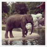 Photo taken at Denver Zoo by Will F. on 9/22/2013
