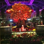 Photo taken at Bellagio Conservatory & Botanical Gardens by Alexander K. on 2/20/2013