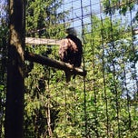 Photo taken at Bald Eagle Exhibit by Jennifer M. on 7/4/2014