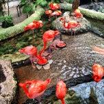 Photo taken at Dallas World Aquarium by Bryce C. on 5/4/2013