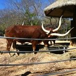 Photo taken at Ankole Cattle Exhibit by Joel L. on 2/11/2012