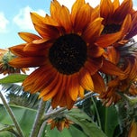Photo taken at Hawi Nice Day Farms by Brooke D. on 9/9/2012