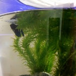 Photo taken at Fish Tank Maintenance Time by Mike ⚽⚽ on 1/4/2015