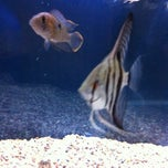 Photo taken at Fish Tank Maintenance Time by Mike on 12/3/2012