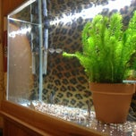 Photo taken at Fish Tank Maintenance Time by Mike ⚽⚽ on 2/3/2013