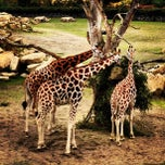 Photo taken at Dublin Zoo by Andy B. on 8/24/2013