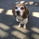 Photo taken at Sirius Dog Run, Kowsky Plaza by Rex S. on 4/12/2014