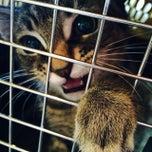 Photo taken at VCA Westside Animal Hospital by Carol D. on 6/18/2014