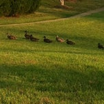 Photo taken at The Duck Pond by Penny N. on 9/8/2013