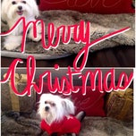Photo taken at Yuppies Puppies Pet Grooming by Bobbi B. on 12/23/2013
