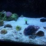 Photo taken at FishPlanet Aquarismo by Rafael F. on 3/25/2013
