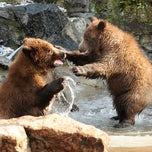 Photo taken at Bronx Zoo by Bronx Zoo on 4/1/2015