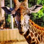 Photo taken at San Diego Zoo by David C. on 5/16/2013