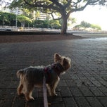 Photo taken at Ali Wai Canal Dog Park (unofficial) by Cleide K. on 10/11/2012