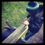 Photo taken at Kinderboerderij Molenwei by Lucia N. on 1/6/2013