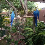 Photo taken at Gatorland - Aviary by Henry W. on 4/7/2013