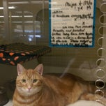 Photo taken at Petco by Alison L. on 8/31/2014