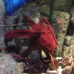 Photo taken at Monterey Bay Aquarium by Katie H. on 3/8/2013