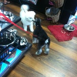 Photo taken at Pet Valu by Dorothy W. on 7/3/2013