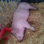 Photo taken at Swine Barn by Lucretia on 8/11/2013