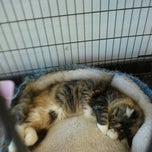 Photo taken at Petco by Stacy T. on 5/15/2012