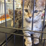 Photo taken at Cats unlimited by Kat O. on 6/12/2014